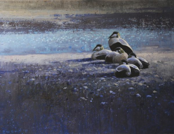 ewoud-de-groot-eiders-2011