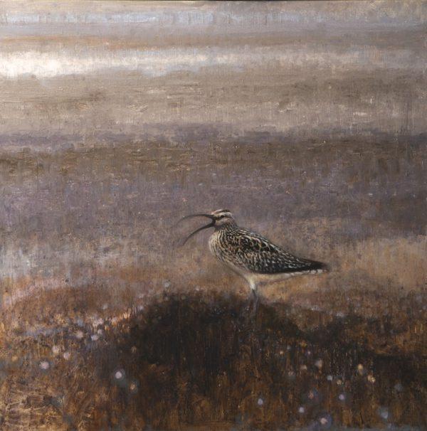 ewoud-de-groot-wildlife-curlew-2013