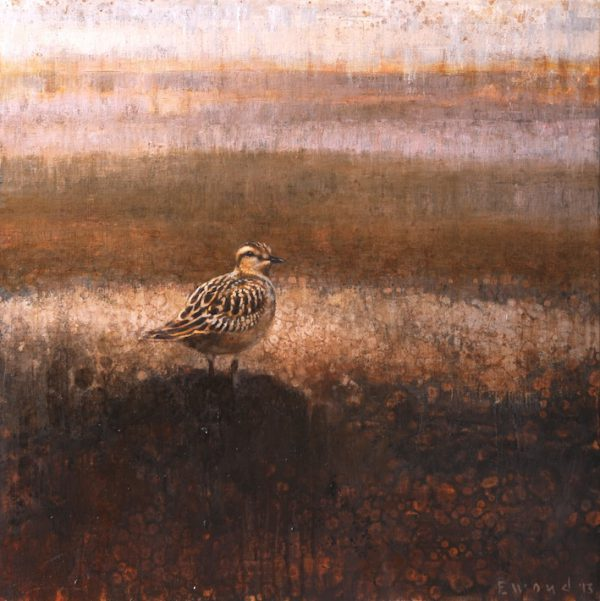 ewoud-de-groot-wildlife-dotterel-2013