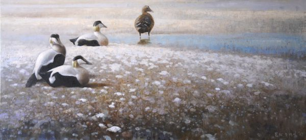 ewoud-de-groot-wildlife-four-eiders-2013