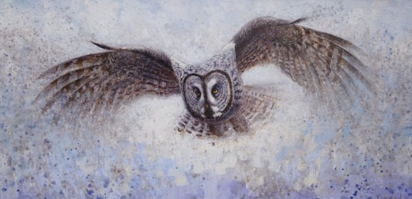 ewoud-de-groot-wildlife-great-grey-owl-2011