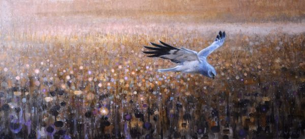 ewoud-de-groot-wildlife-henharrier-symphony-2013