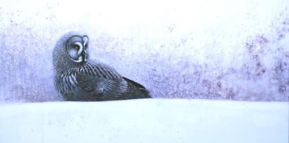 ewoud-de-groot-wildlife-owl03