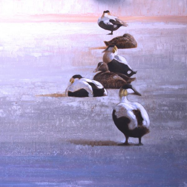 ewoud-de-groot-wildlife-resting-eiders-2013