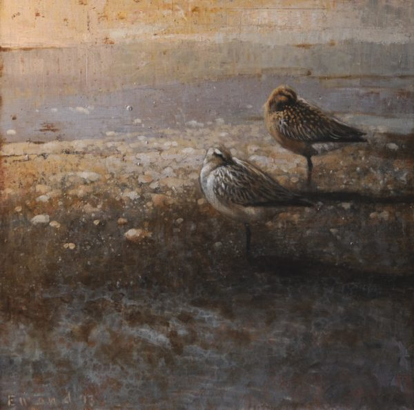 ewoud-de-groot-wildlife-sleeping-godwits-2013