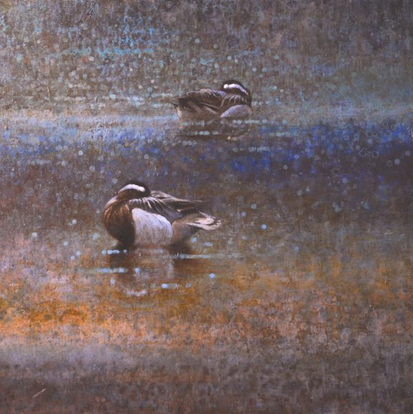 ewoud-de-groot-wildlife-two-garganeys-2013
