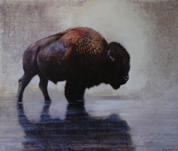 ewoud-de-groot-wildlife-wading-bull-2012