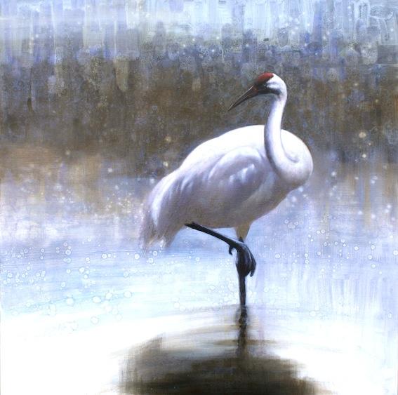 ewoud-de-groot-wildlife-birds14