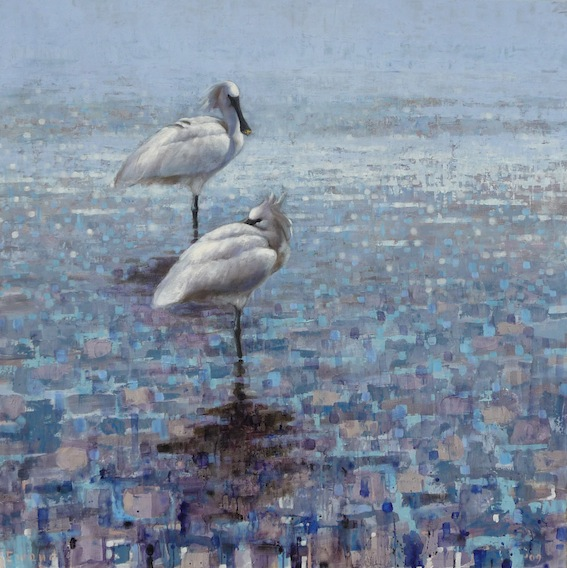 ewoud-de-groot-wildlife-birds25
