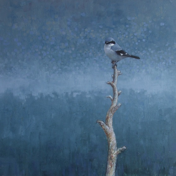 ewoud-de-groot-wildlife-birds29