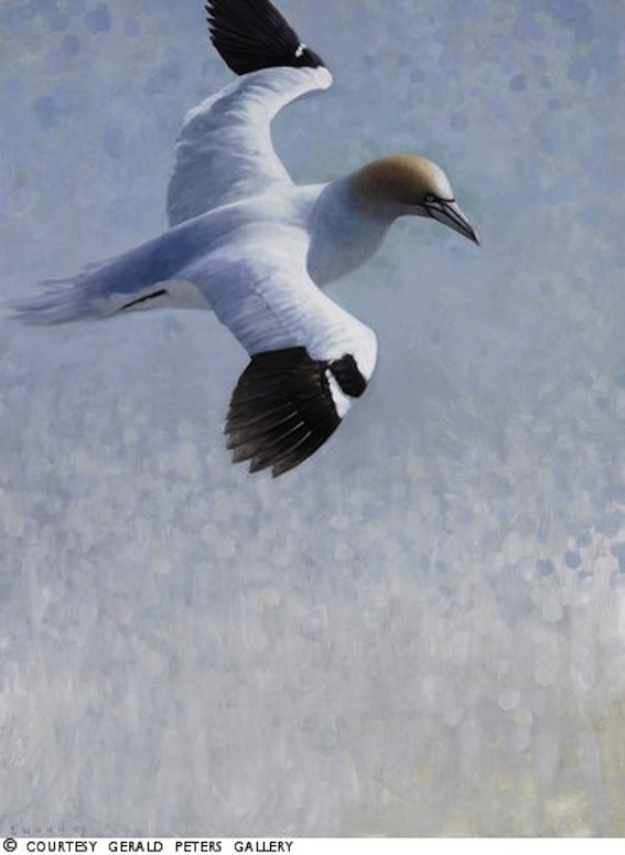 ewoud-de-groot-wildlife-birds35