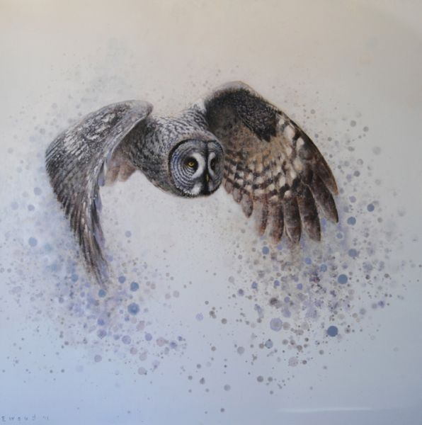 ewoud-de-groot-wildlife-great-grey-owl-2012
