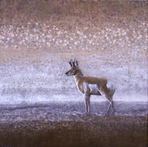 ewoud-de-groot-wildlife03