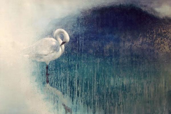 Ewoud-de-Groot-wildlife-art-artist-animals-birds-oil-painting-canvas-linen-resting-swan